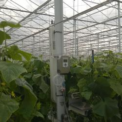 MacView Greenhouse Gas Analyser in cucumbers